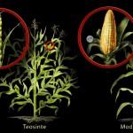 De Evolutietheorie (2)