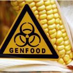 Zijn genetisch gemanipuleerde gewassen kankerverwekkend?