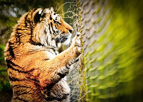 Volgens gedragonderzoekers schrikken mensen eerder te vaak dan te weinig. Volgens de evolutietheorie komt je overlevingskans in het gevaar als je niet voldoende oplet.