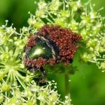 Zelfmoordkrekels, zombiekakkerlakken en andere parasietverhalen