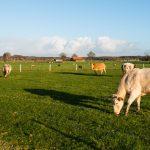 Klimaatverandering: Kunnen we er iets aan doen? Deel 2: landbouw